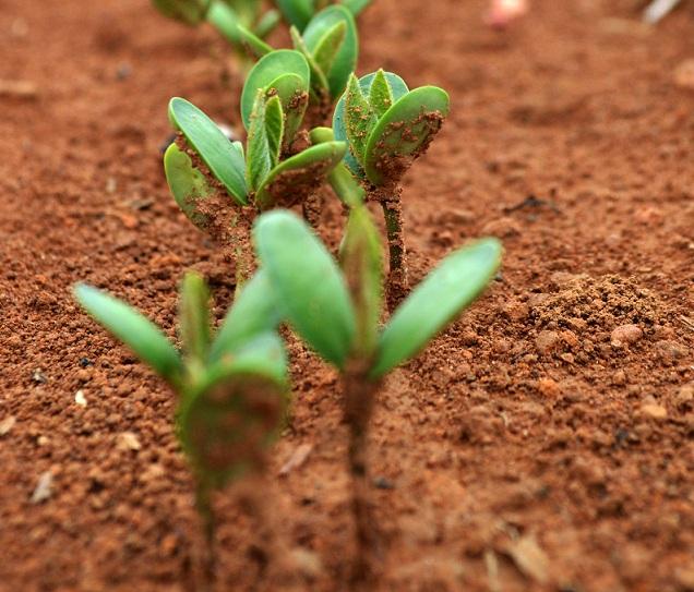 Seed Capital Funding
